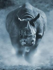 5linx_rhino